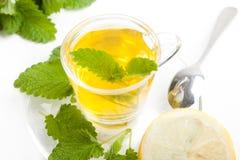 Green herbal tea made of lemon balm, white background Stock Image