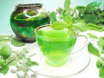 Green herbal tea with mint Stock Photography