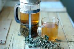 Green herbal tea Royalty Free Stock Images