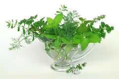 Green herbs Royalty Free Stock Photos