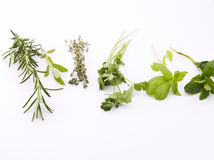 Green herbs Royalty Free Stock Photos