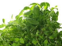 Green herbs Royalty Free Stock Photography