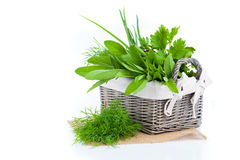 Green herbs in braided basket Royalty Free Stock Photography