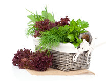 Green herbs in braided basket Royalty Free Stock Photos