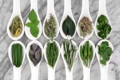 Green Herbs Stock Photos