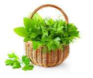 Green Herbs In Braided Basket Royalty Free Stock Image