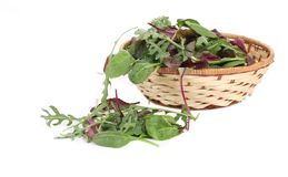 Green herbs mix in basket. Royalty Free Stock Images