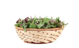 Green herbs mix in basket. Royalty Free Stock Photography