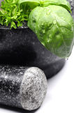 Green herbs in mortar Stock Image