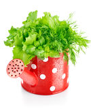 Green herbs in red watering can Stock Photography