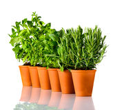 Green Herbs in a Row on White Background royalty free stock photo
