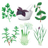 Green herbs set with mortar and pestle Royalty Free Stock Images