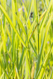 Green herbs sunlit. At sunrise Royalty Free Stock Photos