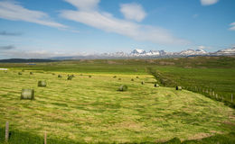 Green hey stack on field in Iceland Royalty Free Stock Images