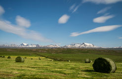 Green hey stack on field in Iceland Royalty Free Stock Photos
