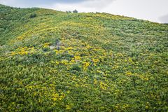 Nature in Budva. Green hil above Budva town in Montenegro Stock Image