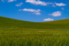 Green Hill. Gentle undulations of the green grass with blue sky Royalty Free Stock Photography