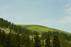 Green hill. Surrounded by spruces Stock Image