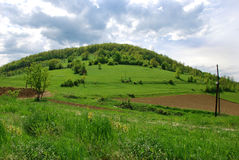 Green hill. Covered by green grass and trees Royalty Free Stock Image