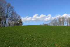 Green Hill. Green grass and blue skys lined with winter trees Stock Photography