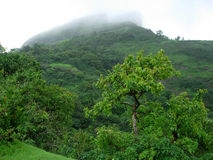 Green Hill. Green Color In Monsoon Royalty Free Stock Photo