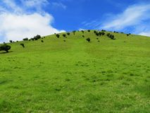 Green Hill with Blue Sky. A green grassy hill with sparse trees against a beautiful blue sky and light clouds royalty free stock photography