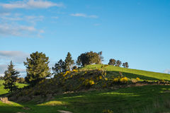 Green hill and Blue Sky. A green hill with trees and a blue sky on the background. Waikato, New Zealand Royalty Free Stock Photo