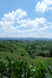Green hill and blue sky view. Green hill and blue sky scene view in Nan province, Thailand Royalty Free Stock Images