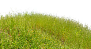 Green hill grass summer natural isolated on white Stock Photos