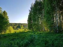Green hill with horizon view and blue sky. Birch grove on the green hill stock images