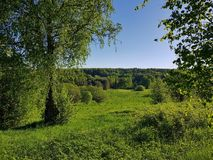 Green hill with horizon view and blue sky. Birch grove on the green hill stock photo