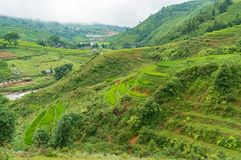 Green hill with rice terraces Royalty Free Stock Photos