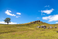 Green hill with a single tree and volcanic rocks Stock Image