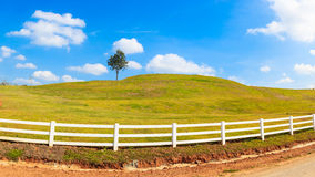 Green hill summer landscape panorama Stock Photos