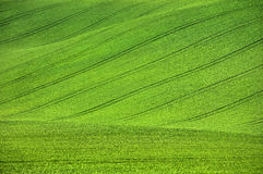 Green hill with tractor trails Stock Image