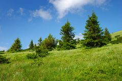 Green hill with trees and cloudy sky Royalty Free Stock Photos