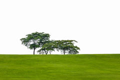 Green hill trees Stock Image