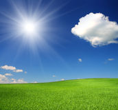 Green hill under sky with sun. Green hill with wheat under blue sky with sun Royalty Free Stock Photos