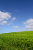 The green hill (vertical). A green hill under a blue sky Royalty Free Stock Images