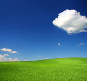 Green hill with wheat. Under blue sky Stock Photos