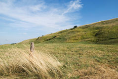 Green hills. Green in summer on the hill Stock Images