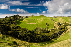 Green hills. Near golden bay, south island, new zealand Royalty Free Stock Photos
