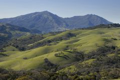 Green Hills of California. In early spring with Mt. Diablo behind Stock Image