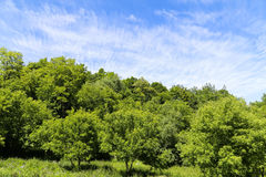 Green Hills and Clear Sky Royalty Free Stock Photography