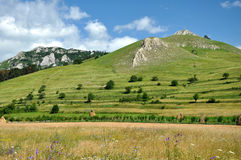 Green hills and countryside meadow Royalty Free Stock Photo