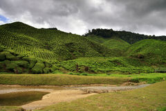 Green hills covered with tea bushes. And small river in front of it - all under stormy sky Stock Photography