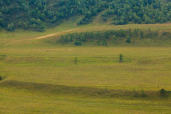 Green hills and fields. The Siberian forest Royalty Free Stock Photo