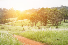Green hills with flowering grass and tree Stock Photography