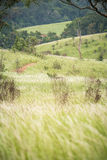 Green hills with flowering grass Royalty Free Stock Photography