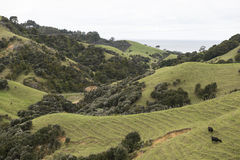 Green hills with forest and meadows Royalty Free Stock Photography